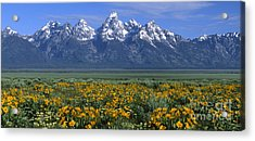 Grand Teton Summer Acrylic Print