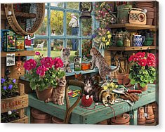 Grandpa's Potting Shed Acrylic Print by Steve Read