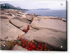 Granite Rocks Of Otter Point Acadia Natl Park Maine Acrylic Print by George Oze