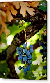 Grape Cluster Acrylic Print