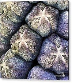 Grape Hyacinth Detail Acrylic Print by Jane Rix