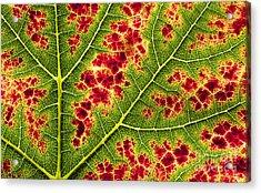 Grape Leaf Texture Acrylic Print by Tim Gainey