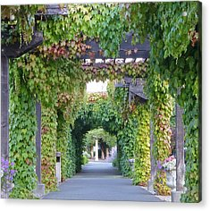 Grape Vine Covered Arbor Acrylic Print by K L Kingston