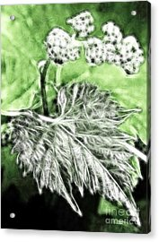 Grape Vine Leaf Acrylic Print by Odon Czintos