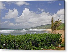 Grape Vines And Barbados Beach Acrylic Print by Willie Harper
