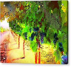 Grape Vines Acrylic Print by Cindy Edwards