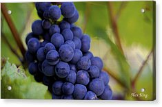 Acrylic Print featuring the photograph Grapes by Alex King