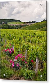 Grapes And Roses Acrylic Print by Allen Sheffield