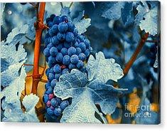 Grapes - Blue  Acrylic Print by Hannes Cmarits