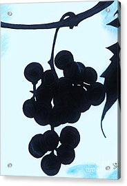 Acrylic Print featuring the drawing Grapes by D Hackett