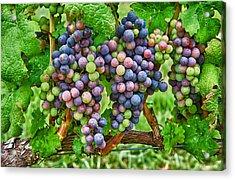 Grapes Acrylic Print