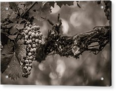 Grapes In Grey 1 Acrylic Print by Clint Brewer