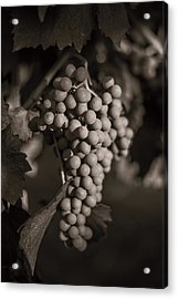 Grapes In Grey 2 Acrylic Print by Clint Brewer