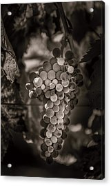 Grapes In Grey 3 Acrylic Print by Clint Brewer