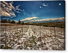 Grapes In Snow Acrylic Print