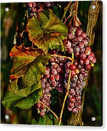 Grapes In The Morning Sun Acrylic Print by Martin Belan