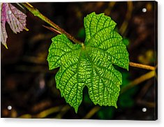 Grapes Of Rath Acrylic Print by Louis Dallara