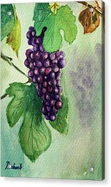 Grapes On The Vine Acrylic Print by Prashant Shah
