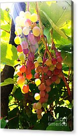 Acrylic Print featuring the photograph Grapes  by Rose Wang