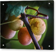 Grapes With Color Acrylic Print by James Barber