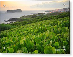 Grapevines And Islet Acrylic Print by Gaspar Avila
