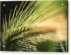 Grass 1 Acrylic Print by Rebeka Dove
