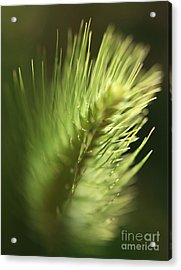 Acrylic Print featuring the photograph Grass 2 by Rebeka Dove