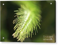 Acrylic Print featuring the photograph Grass 3 by Rebeka Dove