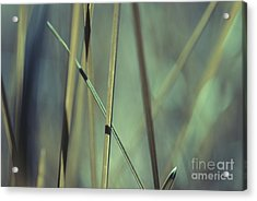 Grass Abstract - 03439gr Acrylic Print by Variance Collections