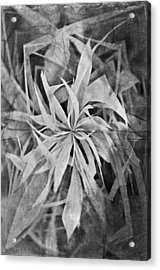 Grass Abstract - Air Acrylic Print by Marianna Mills