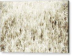 Grass Abstract Acrylic Print by Elena Elisseeva