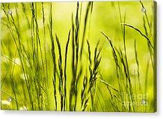 Grass Abstract Acrylic Print by Svetlana Sewell