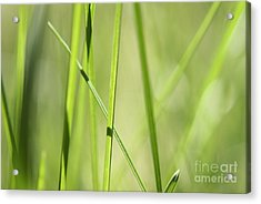 Grass Abstract - Woodie- Green 01 Acrylic Print by Variance Collections