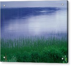 Grass Along A River, Norway Acrylic Print by Panoramic Images