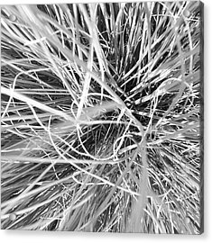 Grass Acrylic Print by Christy Beckwith