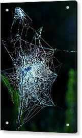 Grass Covered With Spider's Web Acrylic Print by Wladimir Bulgar