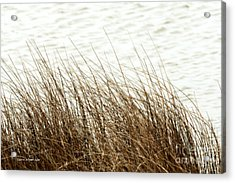 Grass Down By The Shore Of Virginia Beach Acrylic Print by Artist and Photographer Laura Wrede