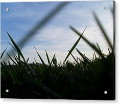 Grass-eye-view Acrylic Print by Kiara Reynolds
