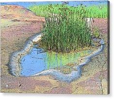 Grass Growing On Rocks Acrylic Print