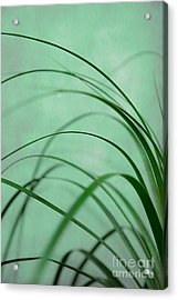 Grass Impression Acrylic Print