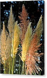 Grass In Color Acrylic Print by Michael Bruce