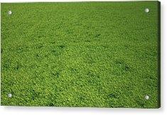 Grass Meadow, Artwork Acrylic Print by Leonello Calvetti