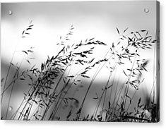 Acrylic Print featuring the photograph Grass On Mount Iwaki by Brad Brizek