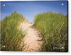 Grass On Sand Dunes Acrylic Print by Elena Elisseeva