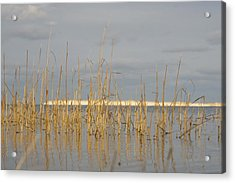 Grass Work Acrylic Print by Eugene Bergeron