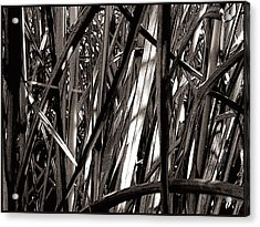 Grasses 2 Acrylic Print by Colleen Cannon