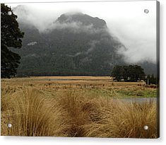 Grasses And Mist Acrylic Print by Ron Torborg