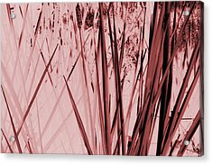 Grasses Acrylic Print by Colleen Cannon