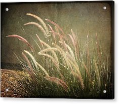 Grasses In Beauty Acrylic Print