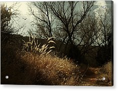 Grasses Of Winter Acrylic Print